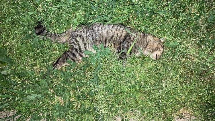 Movimiento Naranja denuncia envenenamiento de gatos en Villa Bello Horizonte de Linares