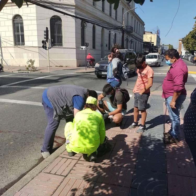 Muere perrita comunitaria atropellada frente a la Municipalidad de Linares