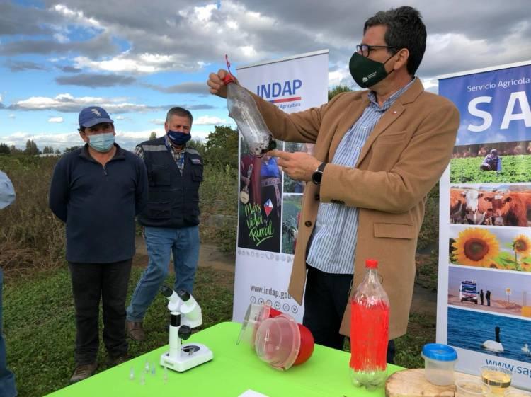 """Ministerio de Agricultura aumenta a 750 las trampas para controlar la plaga """"Drosophila Suzukii"""" en la zona de Longaví y Retiro"""